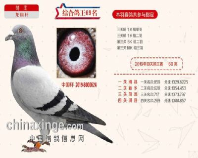 2019秋季北京开创者综合鸽王69名