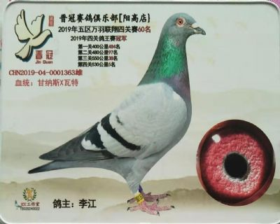 四关综合鸽王冠军