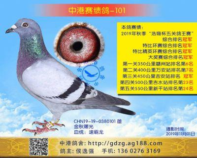 中港赛绩鸽-101