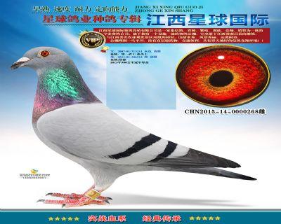 星球270-CHN2015-14-0000268雌