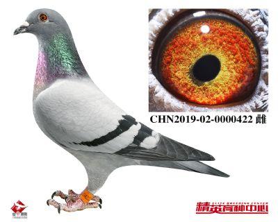 CHN2019-02-0000422