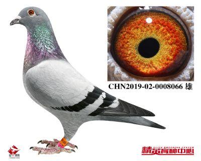 CHN2019-02-0008066