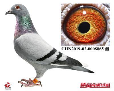 CHN2019-02-0008865