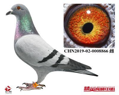 CHN2019-02-0008866