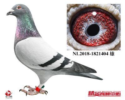 NL2018-1821404