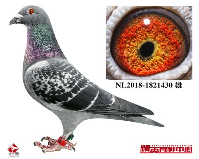 NL2018-1821430