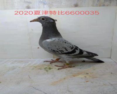 660035