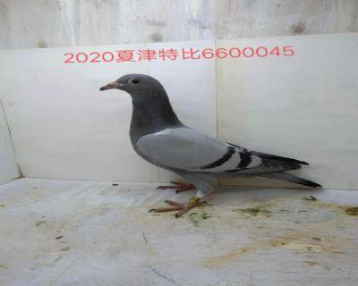 660045