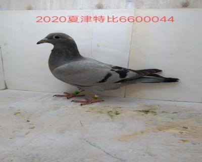 660044