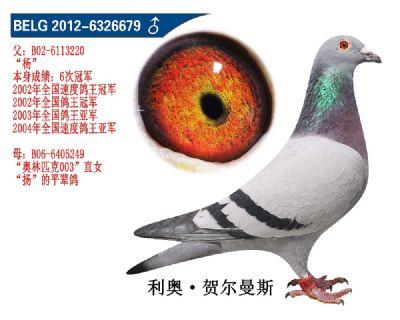 杨直子6679