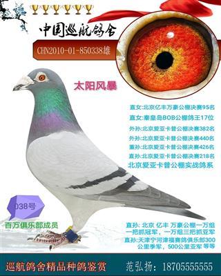 巡航北京卡普公棚实战鸽系