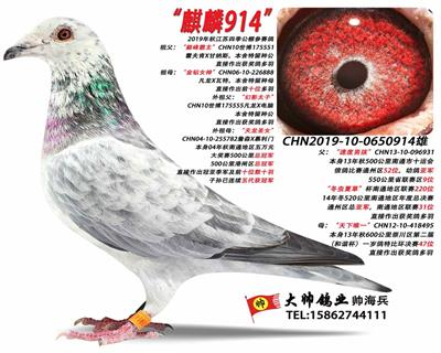"""麒麟914"""