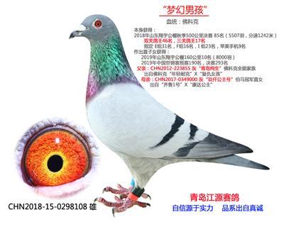 三关鸽王17-佛科克