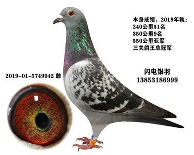 三�P��王冠�(240、350、550)
