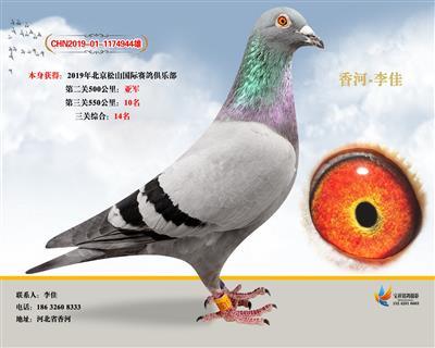 2019年北京松山国际赛鸽俱乐部亚军十名