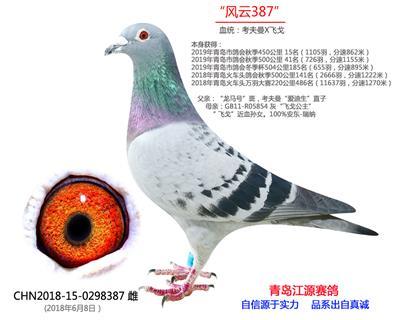 风云387-飞戈