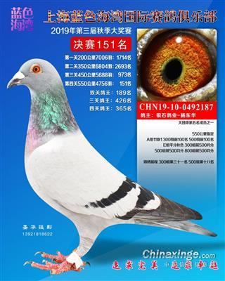 2019入赏赛绩鸽【非卖品】