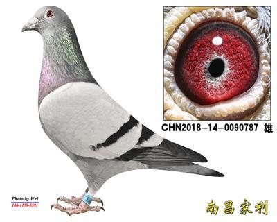 370X惠翔预赛11名妹