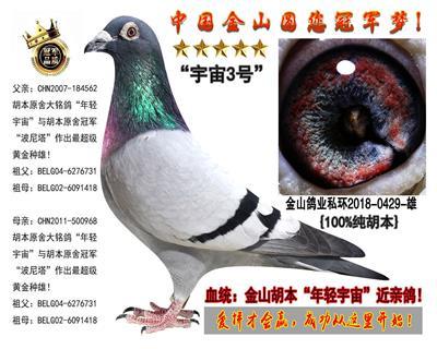 """胡本""""年轻艺术家""""高代近亲鸽!"""