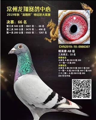 金凤凰19年秋常州龙翔500公里决赛66