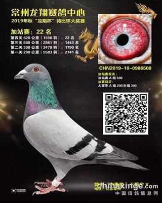 金凤凰19年秋常州龙翔620公里加站赛2
