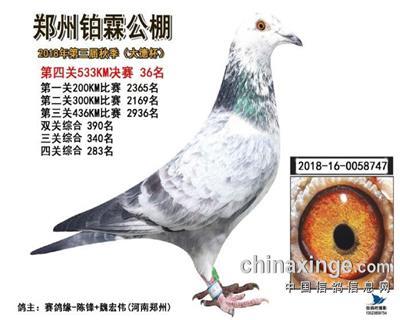 2018年秋郑州铂霖公棚决赛36名