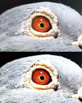 眼睛拍摄效果