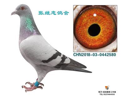 鸽会五名442580