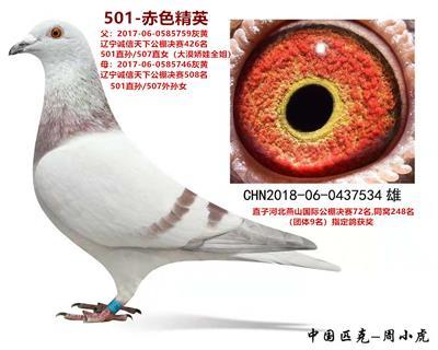 501-赤色精英
