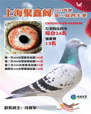 2019年上海聚鑫阁4关综合24名