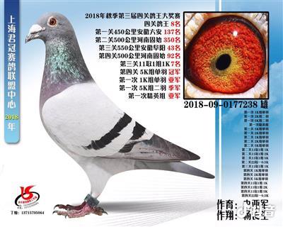 天宇238,18上海