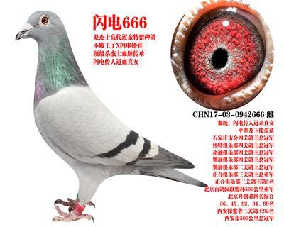 桑杰士 �W�666