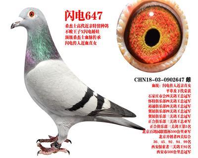 桑杰士 �W�647
