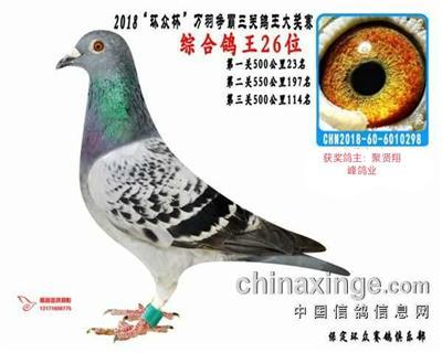 环众三关鸽王综合鸽王26