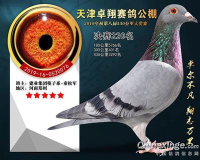 天津卓翔公棚决赛220名
