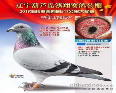 2019年辽宁泓翔公棚成绩鸽