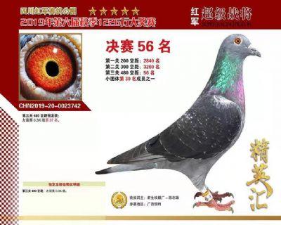 CHN2019-20-0023742