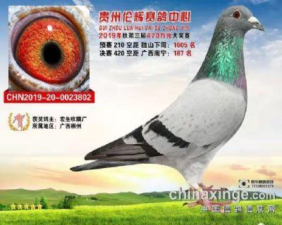 CHN2019-20-0023802