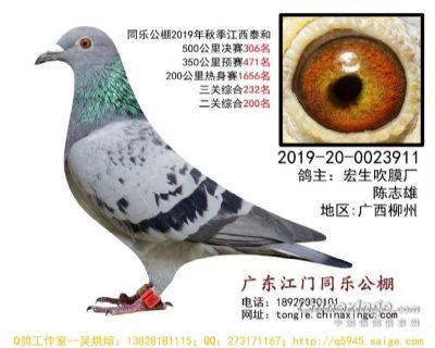 CHN2019-20-0023911