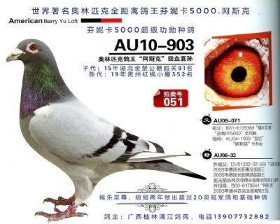 超级种鸽,奥林匹克鸽王冠军阿斯克回血直孙