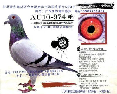 四羽芬妮卡5000同胞,作出超级种鸽