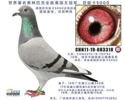 芬妮卡5000,广东深圳翔大公棚亚军女儿