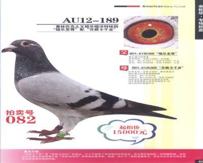 芬尼卡5000子代优秀种鸽