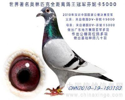 10年深圳中国国家公棚决赛亚军