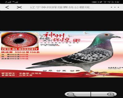 龙鑫281