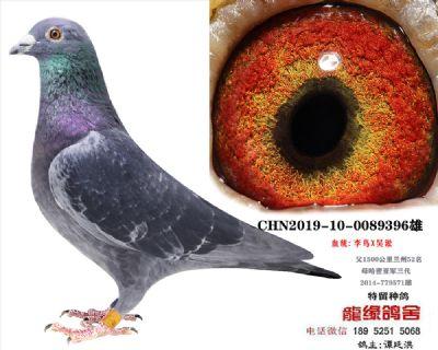 李鸟吴淞2