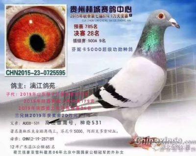 芬妮卡5千鸽王十位亲弟弟,贵州林城28名
