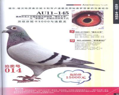 芬妮卡5000只子代优秀种鸽