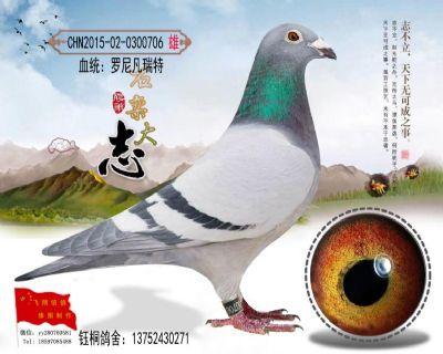 血统罗尼凡瑞特万元组成绩鸽