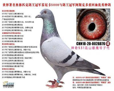 芬妮卡5000,神奇531高山雄鹰号直子